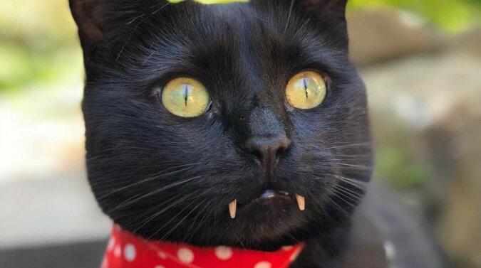 Hrabia Mruczuś uwielbia odwiedzać salon kosmetyczny – wideo