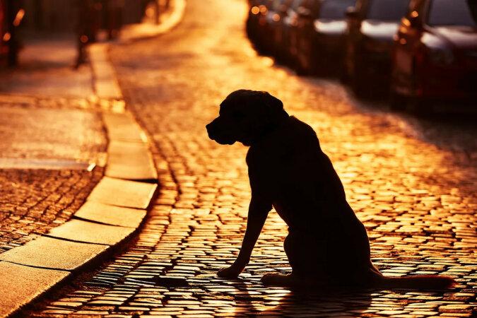W Stanach Zjednoczonych rodzina połączyła się ze swoim zaginionym psem, który przez 10 lat błąkał się po świecie