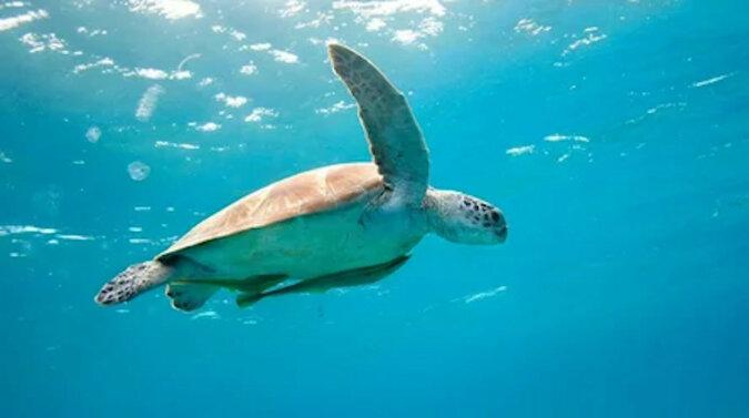 Niewłaściwy wybór: żółw odpowiedział wściekłym atakiem na atak rekina. Wideo