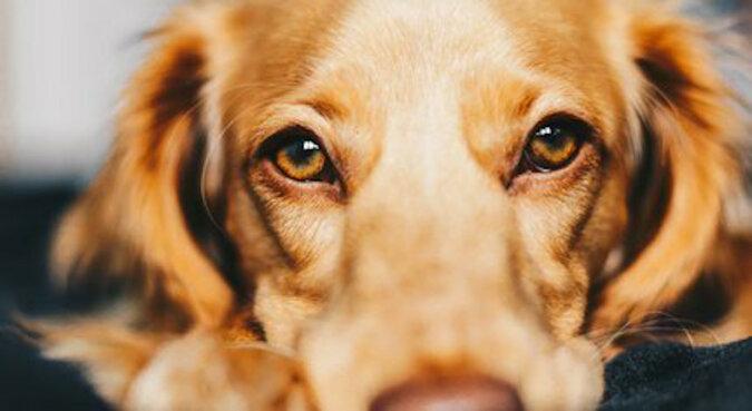 Pies po raz pierwszy spotkał babcię po opuszczeniu szpitala, a jego reakcja wzrusza do łez