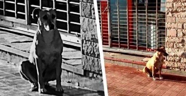 Jak wytłumaczyć psu, który codziennie czeka na właścicielkę obok jej miejsca pracy, że ona już nie przyjdzie? Bardzo wzruszająca historia
