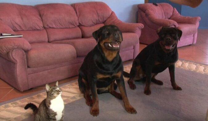 Najbardziej wyszkolony kot na świecie