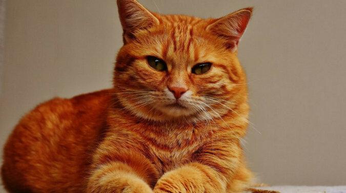 Kot Timofey uwielbia kreskówki, tylko telewizor jest włączony w kuchni - trzeba wyginać się. Wideo