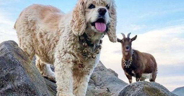 Przygody Frankiego i Maggie. To opowieść o tym, jak po świecie można podróżować z kozą z psem