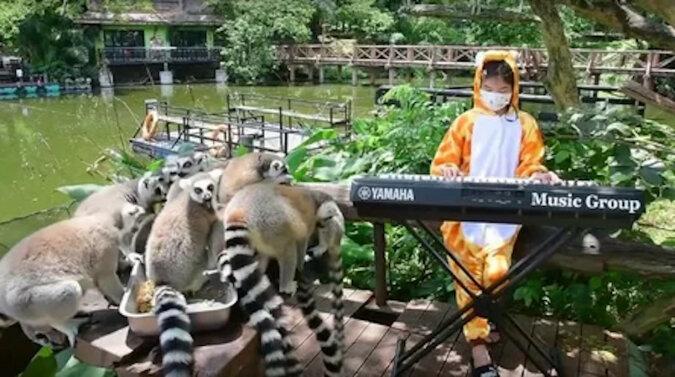 Dziewczyna codziennie organizuje koncert dla zwierząt w Tajlandii – jest im smutno bez ludzi