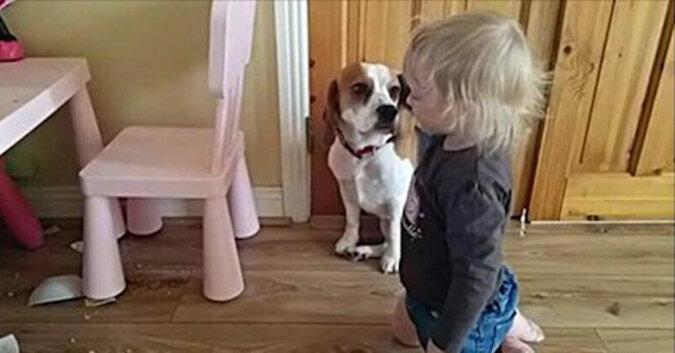 Pies rozbił talerz dziecka. Zobacz reakcje dziecka