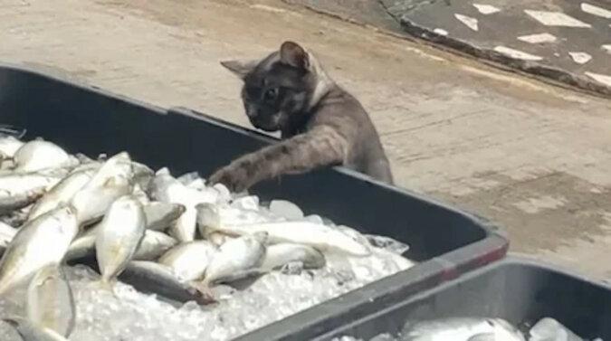 Kot zmęczył się patrzeniem na ryby i zaczął działać. Wideo