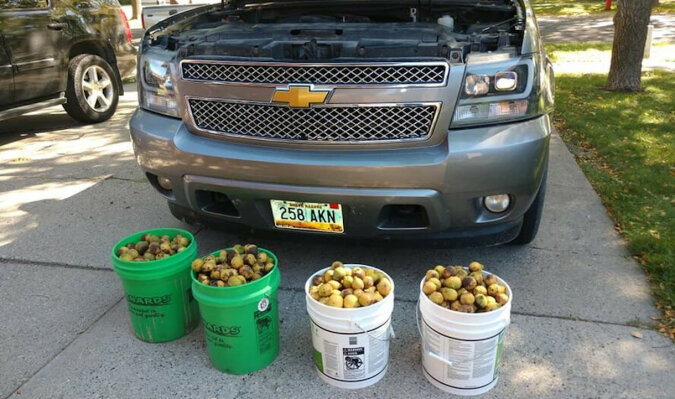 Dzika wiewiórka wykorzystała ciężarówkę jako kryjówkę: zdjęcia