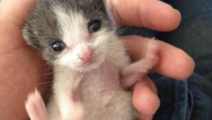 Mężczyzna uratował małego bezbronnego kotka i teraz są nierozłącznymi przyjaciółmi