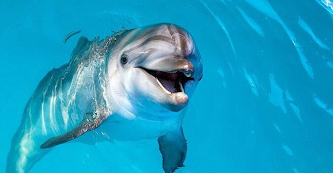 Delfin uśmiechnął się, gdy dziewczyna wykonała akrobatyczny pokaz. Wideo