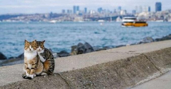 Mężczyzna zrobił zdjęcie przytulających się bezdomnych kotów i twierdzi, że to nie jest inscenizacja