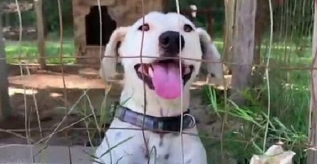 """Pies w wolierze zawsze podskakiwał na widok ludzi i """"uśmiechał się"""". Czekał, aż ktoś da mu odrobinę miłości"""