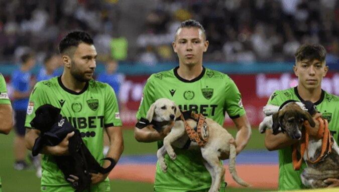 Piłkarze Dinamo Bukareszt wyszli na mecz z psami