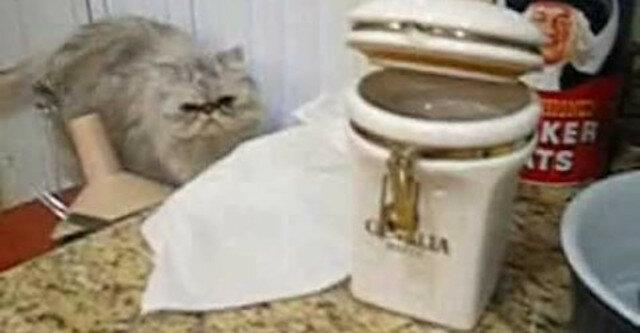 Kot kradnie ciasteczka ze słoika i dzieli się zdobyczą z psem