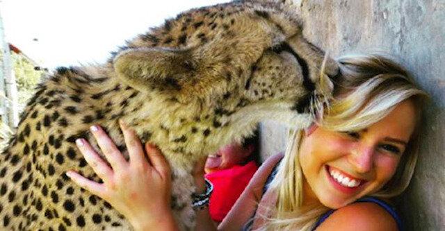 Uratowany maluch gepard jest teraz jej najlepszym przyjacielem