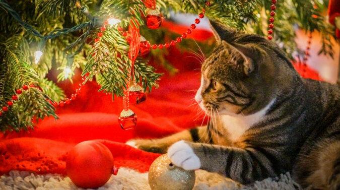 Uczy się przewracać choinkę? Kotka przezabawnie przetestowała zabawki świąteczne. Wideo