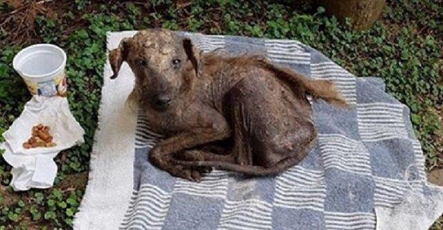 Pies praktycznie nie miał sierści i nie miał już nadziei na ratunek