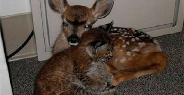 George uratował małego rysia i jelenia przed pożarem lasu. To zmieniło całe jego życie