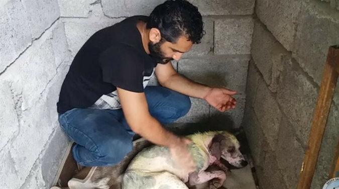 Mężczyzna nie mógł przejść obok wychudzonego psa bez sierści, który umierał na uboczu