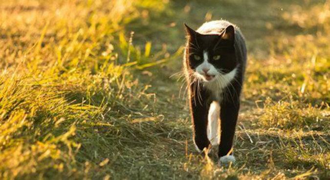 Miauczenie uratowało życie: kot zaprowadził ratowników do zaginionej emerytki