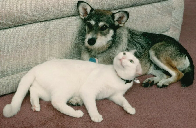 Jak pies Ginny i jej właściciel ratowali koty. Historia dobroci, przyjaźni i troski
