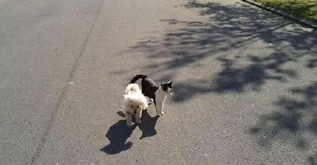 Kot pomaga niewidomemu przyjacielowi znaleźć drogę do domu