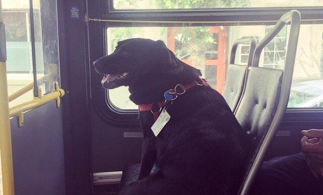 Dopóki pasażerowie nie zauważyli tego, byli oburzeni na widok psa samego w autobusie