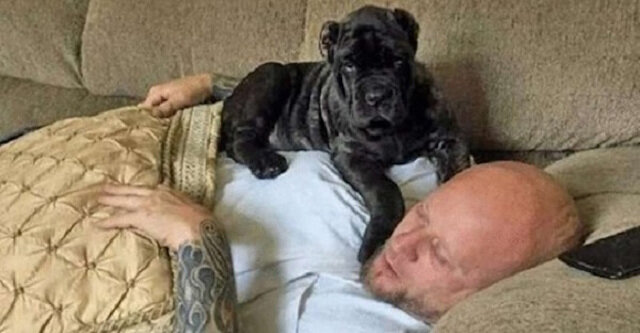 Mężczyzna wychował największego szczeniaka na świecie, który znalazł się w księdze rekordów