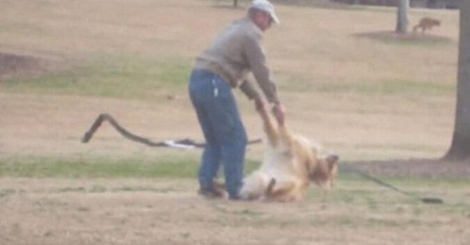 Pies nie chce iść do domu. Chłopaki kręcą wideo w parku, które rozbawi