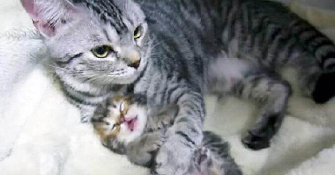 Kotka czule rozmawia ze swoimi maluchami, które są bardzo słodkie