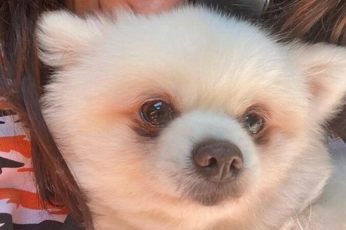 """Właścicielka oddała sparaliżowanego psa na """"farmę mięsną"""". Pies cudem przeżył"""