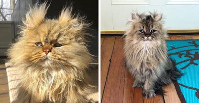 """Kot Barnaby wygląda jak bohater anegdoty """"Podnieść się podniósł, a obudzić się zapomniał"""""""