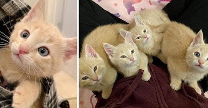 Cztery bezdomne kocięta trzymają się razem, nawet gdy wszystko jest już w porządku i zostały uratowane