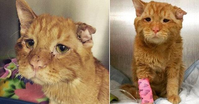 Para zabrała najsmutniejszego kota i tak oto zmienił się w ciągu zaledwie godziny