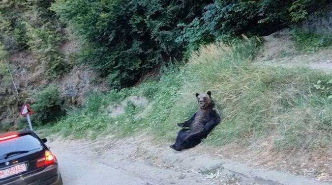 Niedźwiedź z Rumunii pokazał w jednym filmiku idealny sposób na relaks