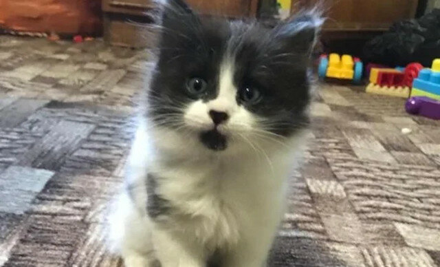 Zganiła syna za przyprowadzenie kociaka, ale kiedy przekonała się na własne oczy, kto to uczynił, zdała sobie sprawę, że się pomyliła