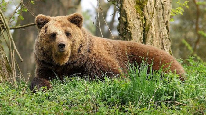 Przyjazny pies chciał poznać niedźwiedzia, ale właściciel był temu przeciwny. Wideo