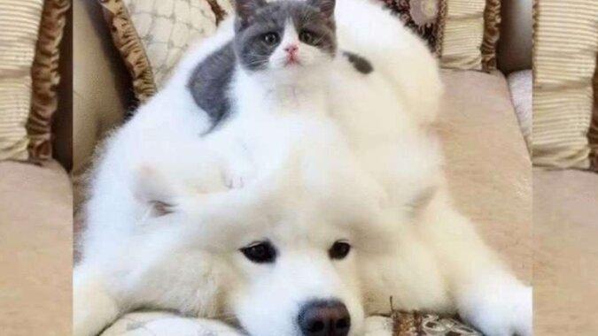 Mały kot i Puszek: jak się przyjaźnią pies i kot