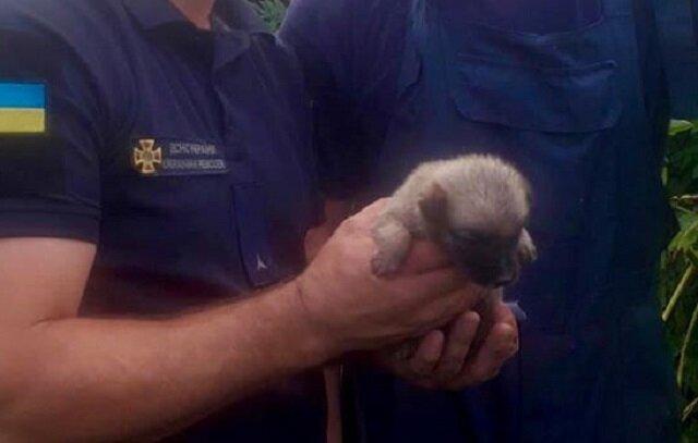 W miasteczku Równe dwóch mężczyzn uratowało szczeniaka, który został zasypany ziemią po burzy