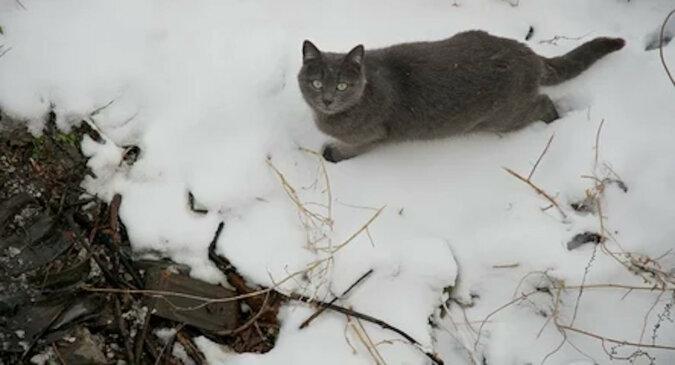 Kot po raz pierwszy w życiu wyszedł na spacer po śniegu i był zdezorientowany. Zabawne wideo