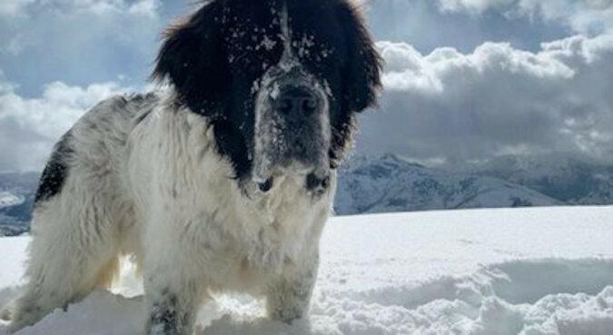 Ice Center zorganizowało specjalną rozrywkę dla ciężko chorego psa