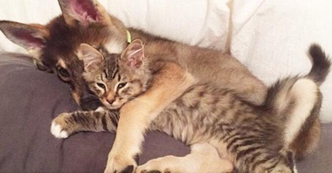 Właścicielka zdecydowała się na adopcję kociaka ze schroniska, ale wybór pozostawiła swojemu psu