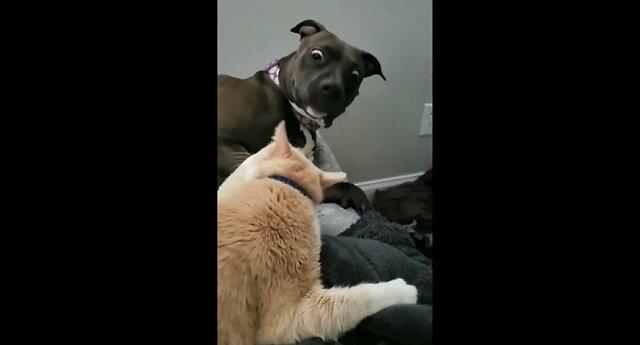 Kot w odpowiedzi na czułość podrapał psa, a jego reakcja jest bezcenna. Wideo