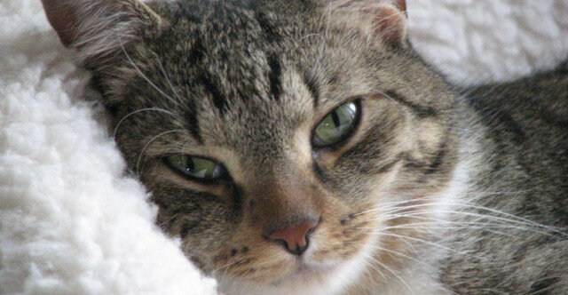 Stara kotka poszła na spacer, ale z ulicy wróciła nie sama. Właściciele byli zdezorientowani tym, co zobaczyli i wezwali policję