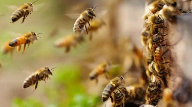 Mężczyzna szedł ulicą z rojem pszczół w dłoni i ujawnił swój sekret. Wideo