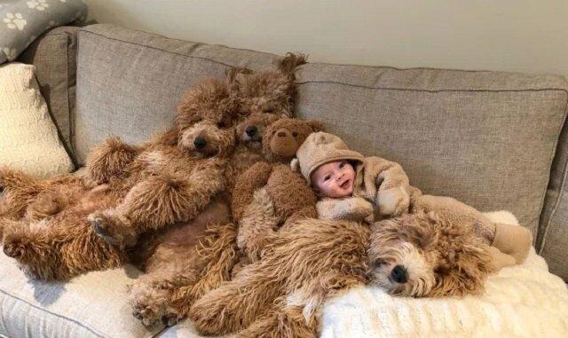 """6-miesięczne dziecko w otoczeniu psów rasy """"Goldendoodle"""" się stało gwiazdą w internecie"""