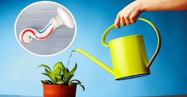 Pasta do zębów do odżywiania roślin