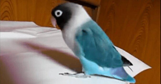 Papuga usłyszała swoją ulubioną melodię. A teraz spójrz na jej łapy