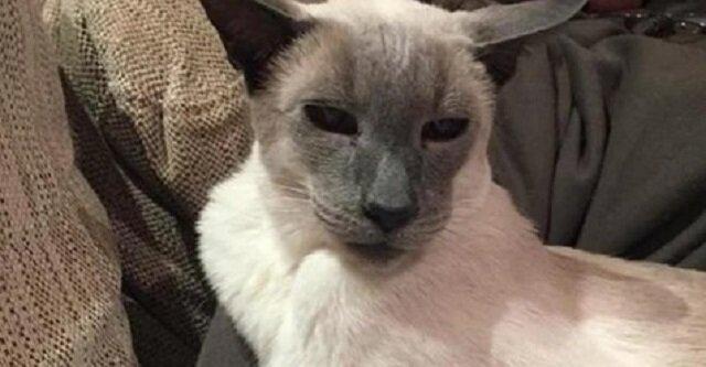 Stary 17-letni kot cierpiał na artretyzm, a właścicielka wymyśliła oryginalny sposób, aby mu pomóc