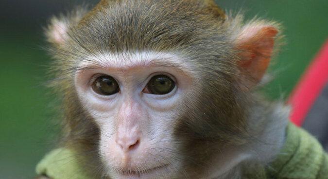Troskliwa małpia mama karmie swoje dziecko: bardzo uroczy film